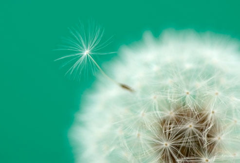 tong quan ve hen suyen 6 - Tổng quan về hen suyễn